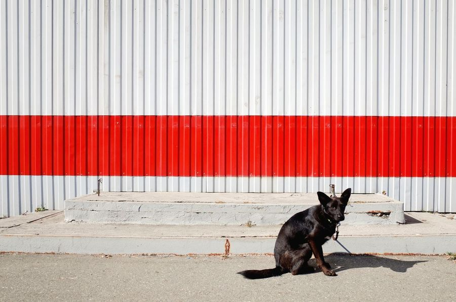 Walls Streetphotography Red Urban Detail EyeEm Selects Pets Dog