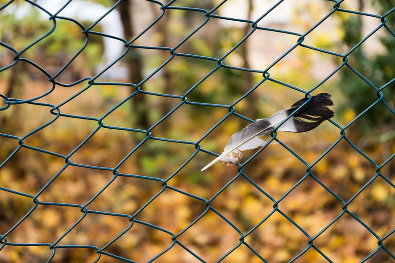 Autumn Berlin Day Daytime Feather  Fences Nature No People Outdoor Spaziergang Walkover