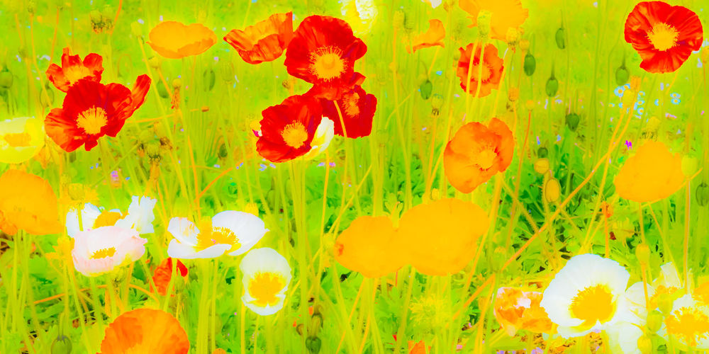 Spring meadow, spring! Abstract Flowers Flower Wisdom Spring Blooming Colourful Poetic Springtime Plant Life Meadow Petal Close-up Beauty In Nature Vibrant Spectacular EyeEm Nature Lover Green Color Backgrounds Meadow Flowers Full Frame Flower Head Multi Colored Vibrant Color Colored Background Not Selected - The Best Pics Discarded By The EyeEm Algorythm Près De Gry