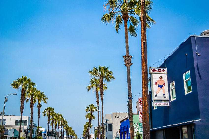 Abbot Kinney Architecture Blue Built Structure California City City Life Clear Sky Day Growth Low Angle View Nature No People Outdoors Palm Tree Palm Trees Sky Tree Tree Trunk