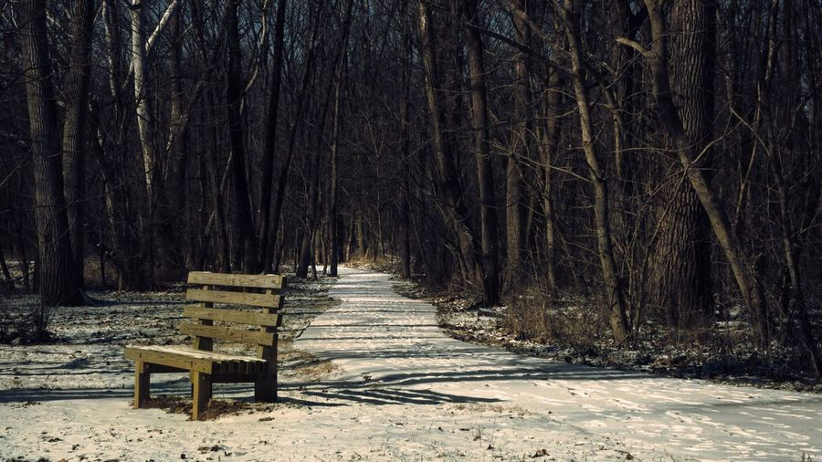 Arbuckle Park Tree Nature Forest Outdoors Tranquility No People Shadow Winter Bare Tree Cold Temperature Day