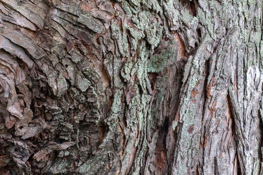 Canon EOS 60D Backgrounds Full Frame Textured  Pattern Rough No People Tree