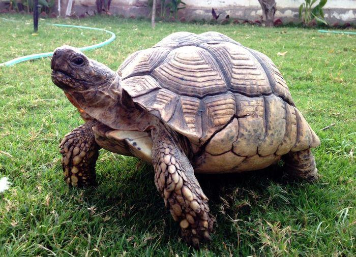 100 year old tortoise...!!! Nature Wildlife Photography Tortoise