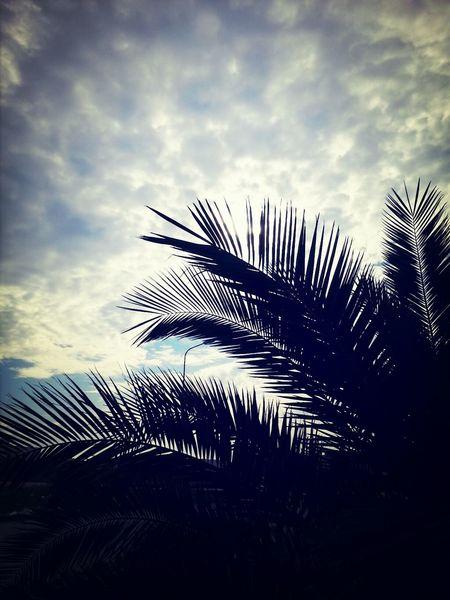 Palm Palmtree Sky Skyporn