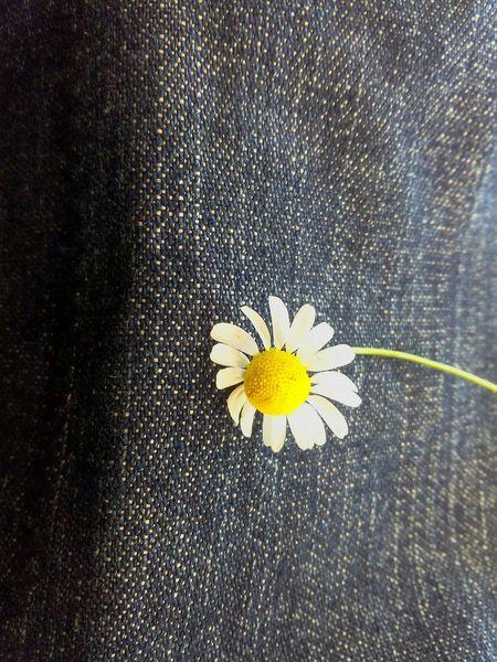 Jeanslover Flower Tea Flower