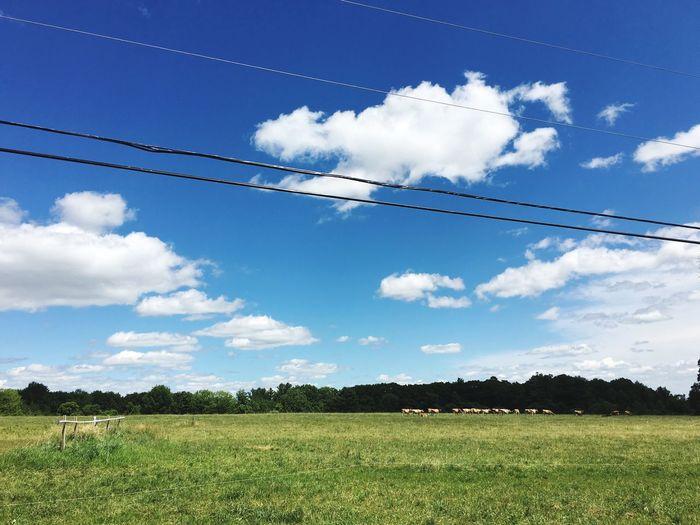 Hilltop cattle cuties. First Eyeem Photo