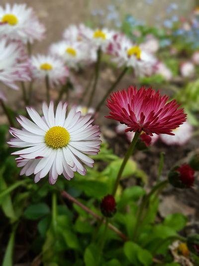 Flowers Summer Adventure Enjoying Life Im Happy ❤ Samsung Galaxy S7 Edge Photo Shoot