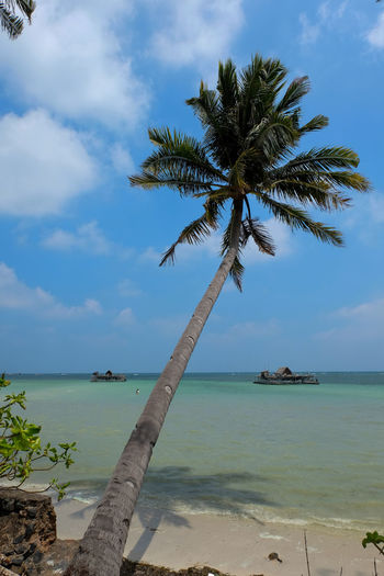 EyeEmNewHere Sea Beach Palm Tree Tree Water Island Tranquility Horizon Over Water Tropical Climate Sand Nature Outdoors Landscape Beauty In Nature Colour Your Horizn