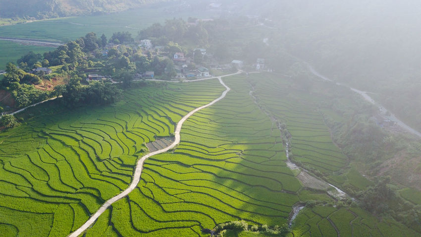 Been There. Agriculture Beauty In Nature Beauty In Nature Been There, Done That Day Farm Field Growth High Angle View Landscape Mountain Nature No People Outdoors Patchwork Landscape Rice Paddy Rural Scene Scenics Terraced Field Tranquil Scene Tranquility Tree
