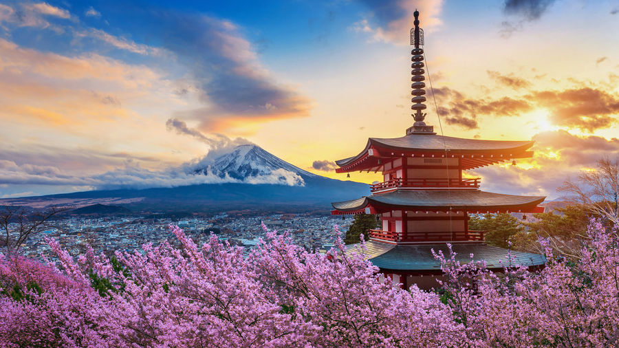 Beautiful landmark of Fuji mountain and Chureito Pagoda with cherry blossoms at sunset, Japan. Spring in Japan. Sky Beauty In Nature Cloud - Sky Nature Belief Sunset Scenics - Nature Religion Architecture Spirituality Built Structure Plant Mountain Place Of Worship Building No People Building Exterior Travel Destinations Tower Outdoors Spire  Shrine Purple