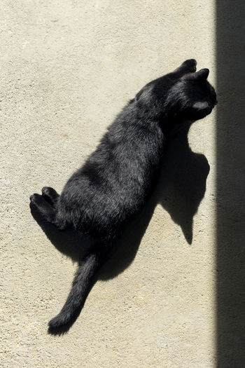 Black cat laying on a floor sun bathing Black Cat Black Cats Are Beautiful Cats Of EyeEm Cats 🐱 Animal Black Cat Photography Black Color Cat Cat And Shadows Cat Lover Cat Lovers Cat Portrait Cat Sun Bathing Catofinstagram Catoftheday Catsagram Catsofinstagram Cat♡ Domestic Animals Domestic Cat High Angle View Mammal Mammals One Animal Shadow