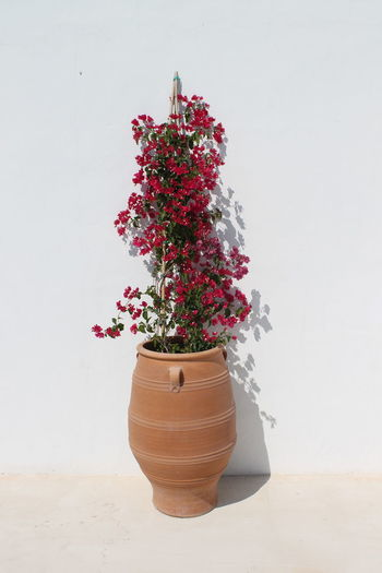 Flower vase on potted plant against white wall