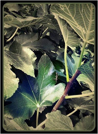 Lezart Tree