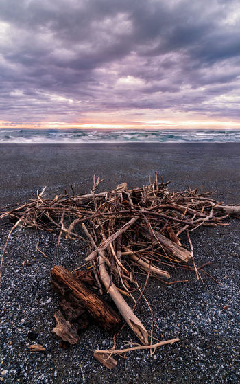 Driftwood on a beach at sunset. Cloud - Sky Sky Nature Land Wood - Material Tranquility Beauty In Nature Sunset Scenics - Nature No People Tranquil Scene Water Log Wood Sea Outdoors Beach Plant Driftwood California Scenics Driftwood Beach Sand Landscape_Collection Seascape Photography