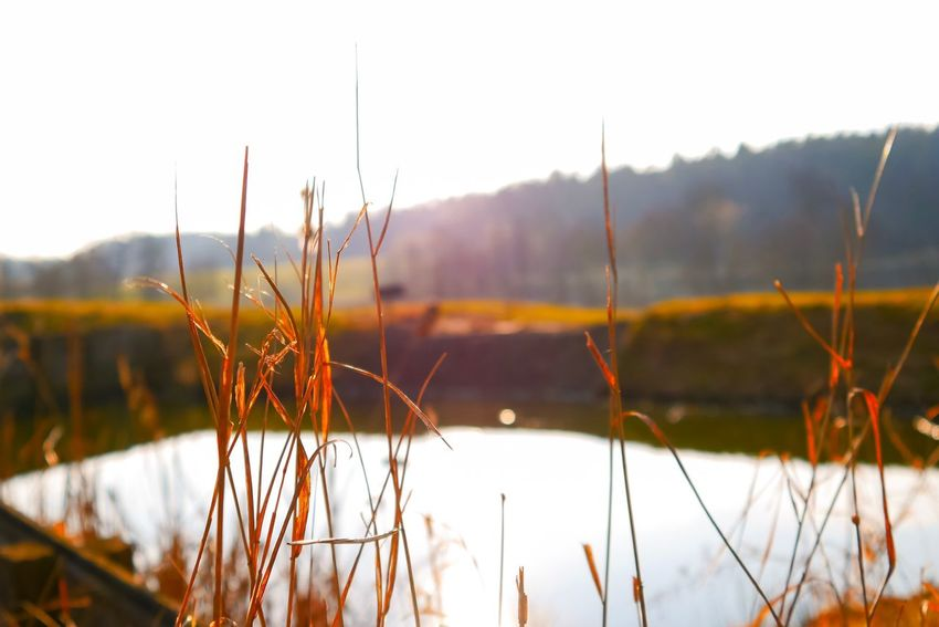 Selective Focus Germany Wanderlust Clouds Forest EyeEm Best Shots Photography EyeEm Selects Plant Tranquility Beauty In Nature Growth Nature Focus On Foreground Timothy Grass Grass Non-urban Scene Outdoors Lake Close-up Water Scenics - Nature Day Tranquil Scene Sky No People