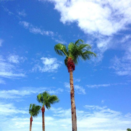 3 Palms 'Three Is A Magic Number' NEM 2013 NEM Submissions NEM Clouds