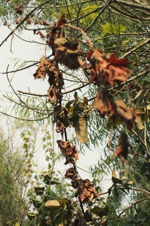 Natural Hojas Secas Hojas Photo Foto Photooftheday Fotografia First Eyeem Photo Capturandomomentos Flower Buenavida