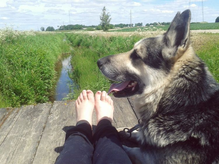 Summertime Sun Worm Calm Nature Best  Time With Bestfriend Dog Like