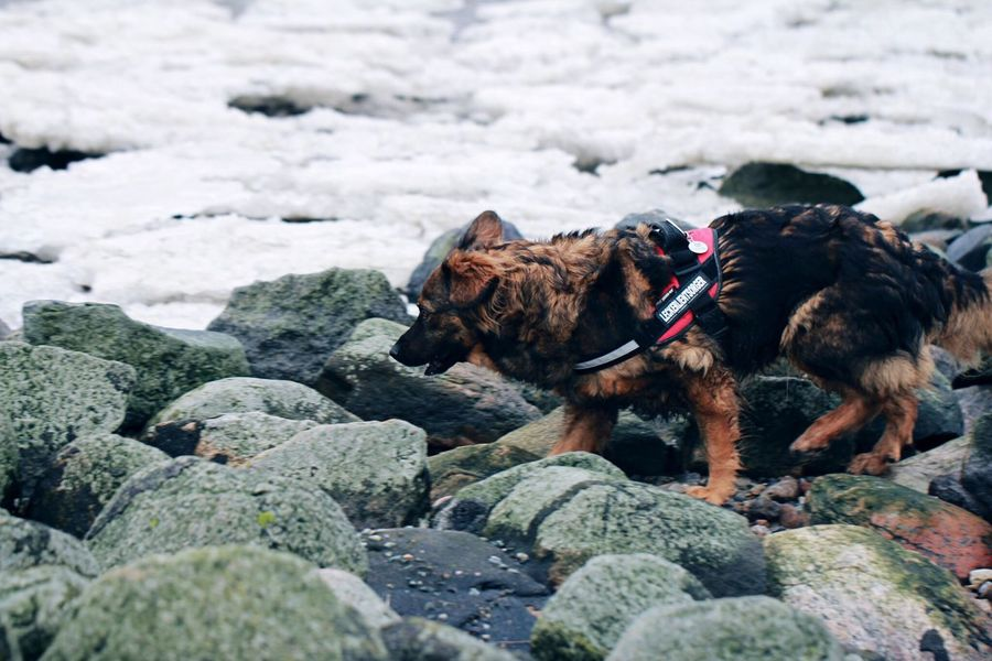 Ice and stones and dog. At The Sea Am Meer Walking Around Taking Photos Tag Am Meer... Plattes Land Nordfriesland Nordsee Northsea Tadaa Community Nationalpark Wattenmeer Ilovemydog Dog Dog❤ Meer Sea Dogs Dogslife Whatever