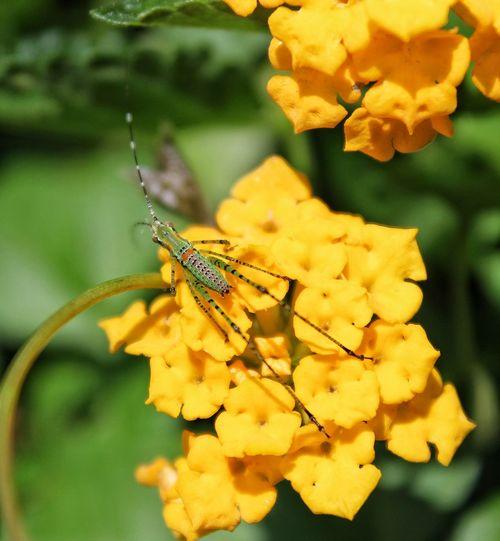 Yellow Hopper