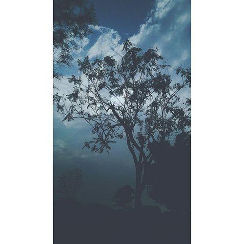 Into the nature Tree Sillhouette Sun Blue Blueearth_love VSCO Vscocam