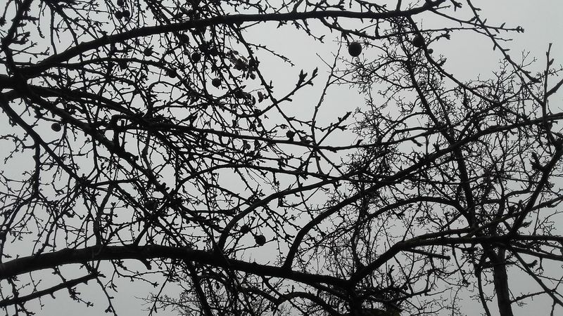 Merry Christmas (to those who celebrate it) , enjoy this day ! ❤ Picture is not related to Christmas, I'm sorry but I'll take a lot of photos later today. Today :) Tree Sky Christmas Day Christmas Nature