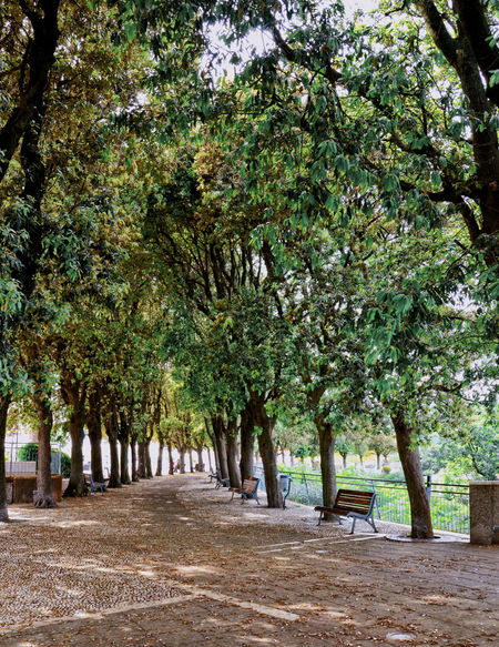 Calmness Green Beauty In Nature Day Growth Italy Landscape Marche Nature No People Outdoors Park Scenics Sirolo Tree Tree Alley