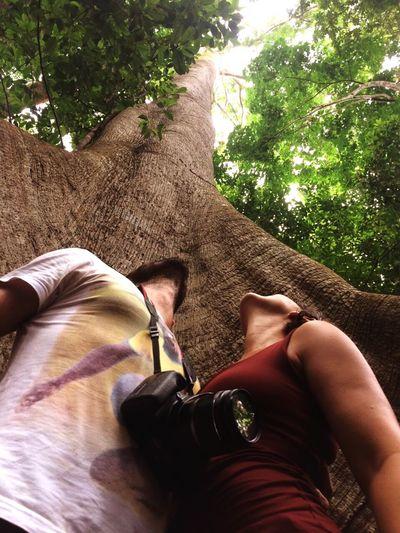 Amazonia Amazonia_paraense Brazil SAMAUMA Big Tree Nature