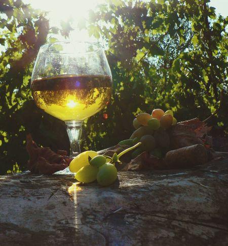 sun + grapes = wine ;) RePicture Growth In Vino Veritas Taking Photos Relaxing Enjoying Life Nature The Great Outdoors - 2015 EyeEm Awards Sun Light Sun Lens Flare Autumn Autumn Colors EyeEm Nature Lover