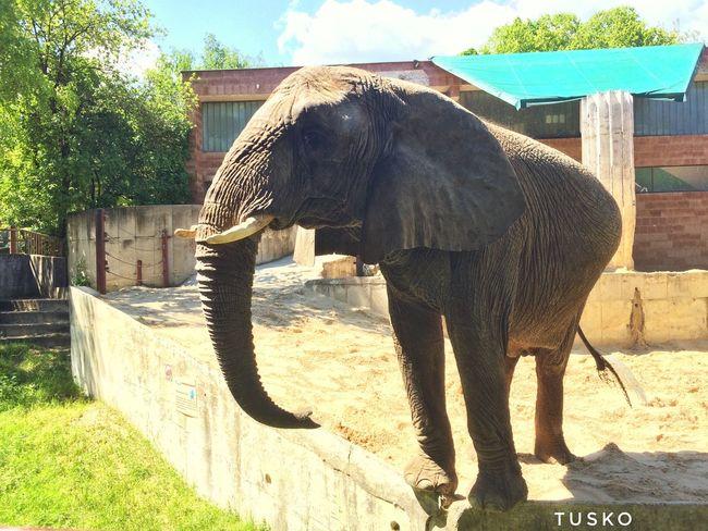 Bojnice Slovakia Bojnice Slovakia Elephant Zoo Zoo Animal Zoo Elephant