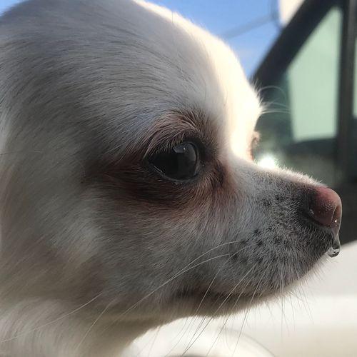 O carona 2 🤧 One Animal Animal Themes Animal Mammal Domestic Pets Domestic Animals Window Dog No People