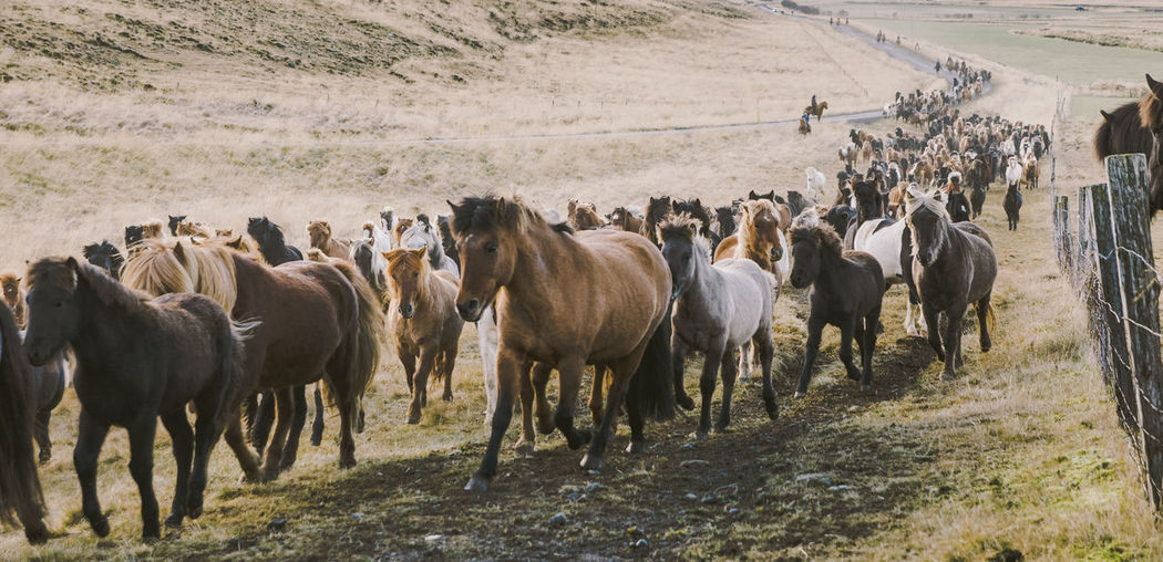 Horses running on land