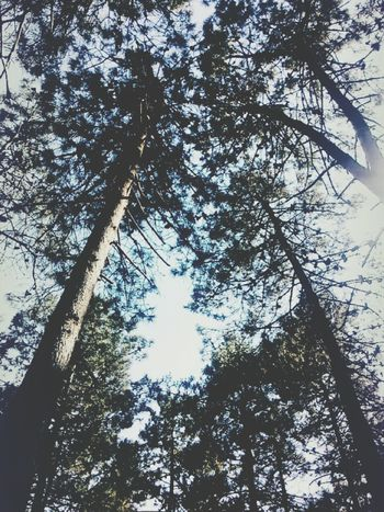 GoodMorningg ♥ Tree Sky Day No People Beauty In Nature Nature Sun Forest