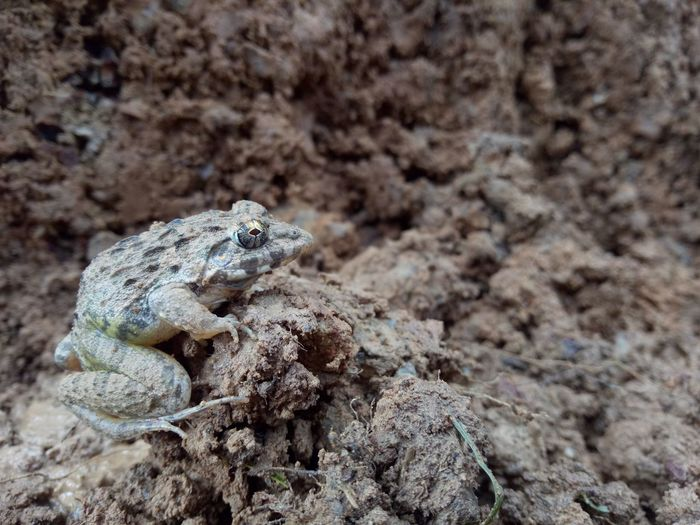 Close-up of frog on mud