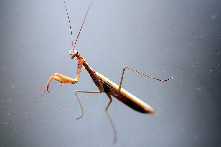 Close-up of praying mantis on glass