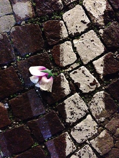 Flower Petal Nature Fragility No People High Angle View Day Outdoors Beauty In Nature Stone Tile Freshness Close-up Flower Head Art Is Everywhere Mix Yourself A Good Time Press For Progress