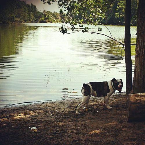 Beatrice at Soldan Dog Park