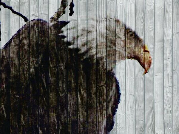 Enjoying Life Taking Photos Eye4photography  Eagles Eagleeye Art, Drawing, Creativity Artistic Nature_collection Nature ArtInMyLife
