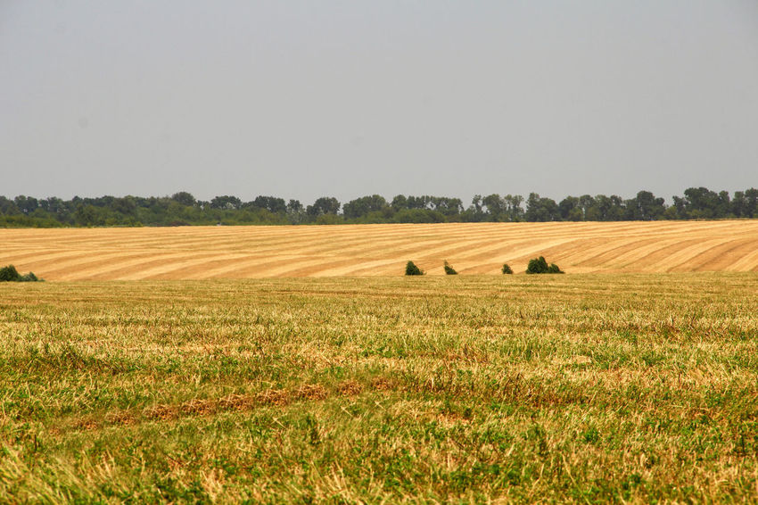 Field after harvest Agriculture Beauty In Nature Crop  Cultivated Land Day Field Grass Horizon Over Land Landscape Nature No People Non-urban Scene Outdoors Rural Scene Sky Streaks Striped Pattern Stubble Stubble Field Tranquil Scene Tranquility