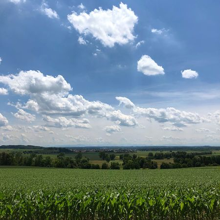 Cloud - Sky Sky Plant Field Landscape Growth Agriculture Beauty In Nature Tranquility Land Tranquil Scene Rural Scene Green Color No People Nature Day Environment Farm Scenics - Nature