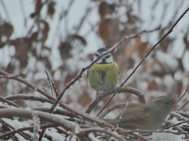 One Animal Bird Perching Animals In The Wild Animal Themes Focus On Foreground Animal Wildlife
