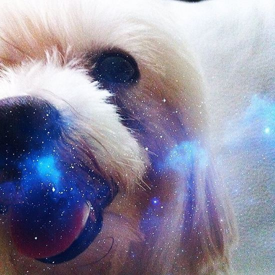 The girl and the blue mist Instagram Instadaily Instacute Maltese Twilight Galaxy Portrait Photooftheday Photo Instaphoto Puppy Dog Pet Furbaby Cute Photogenic  Covergirl Smile White Blue Black Singapore Petlover Paws Photo Of The Day