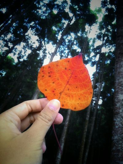 Still Alive Gunung Salak INDONESIA Nature Forrest Trees Green Red Fall Leaves