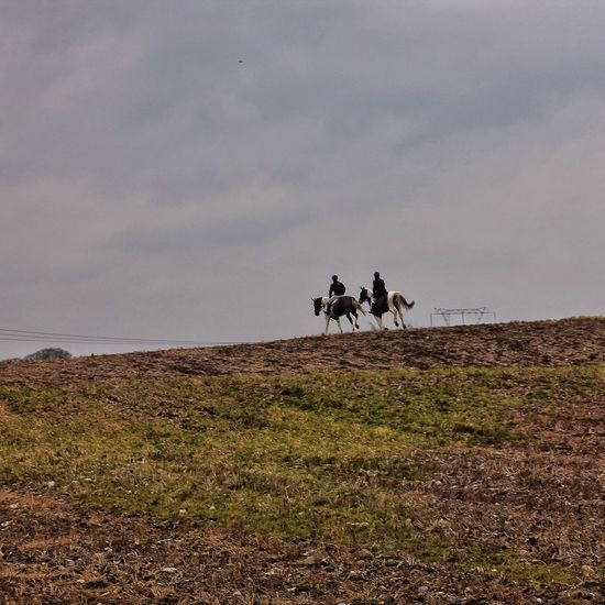 """""""And what is it to say goodbye to the swift pony and the hunt? It is the end of living and the beginning of survival."""" Chief Seattle Enjoying Life Tadaa Community Horse Love In The Landscape"""