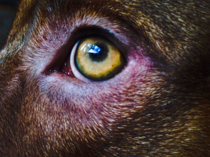 You Name It One Animal Animal Themes Looking At Camera Domestic Animals Portrait Close-up Pets Animal Head  Mammal Iris - Eye No People Eyeball Indoors  Day