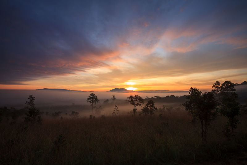 Misty morning sunrise at Thung Salang Luang National Park Phetchabun,Tung slang luang is Grassland savannah in Thailand Beauty In Nature Day Grass Growth Hazy  Landscape Nature No People Outdoors Scenics Sky Sunset Tranquil Scene Tranquility Tree