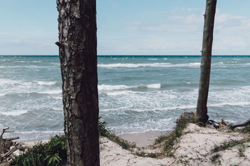 Beach Beauty In Nature Day Horizon Over Water Nature No People Outdoors Scenics Sea Sky Tranquil Scene Tranquility Tree Tree Trunk Water Wave