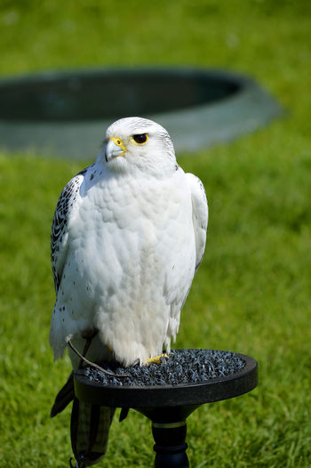 Close-up of owl perching on grass
