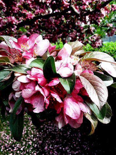 i love spring Flower Head Flower Leaf Petal Pink Color Close-up Plant