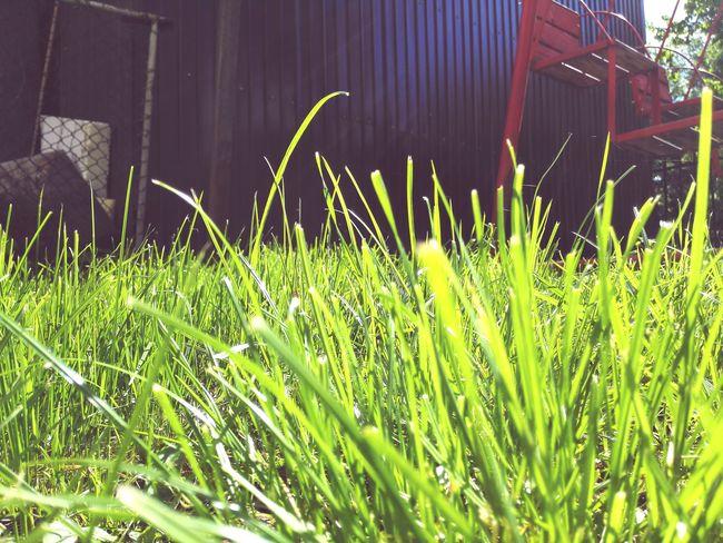 Grass Green Grass Midday Sunlight